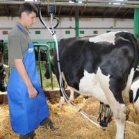 Pieno – vakuumo linijos